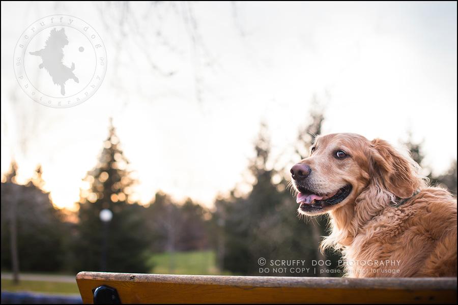 09_Kitchener_ontario_pet_photographer_bruin dawson smith-186-Edit