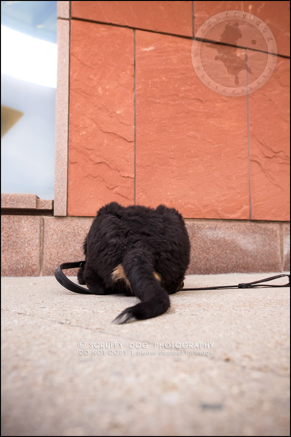 10_Kitchener_ontario_pet_photographer_bruin dawson smith-150