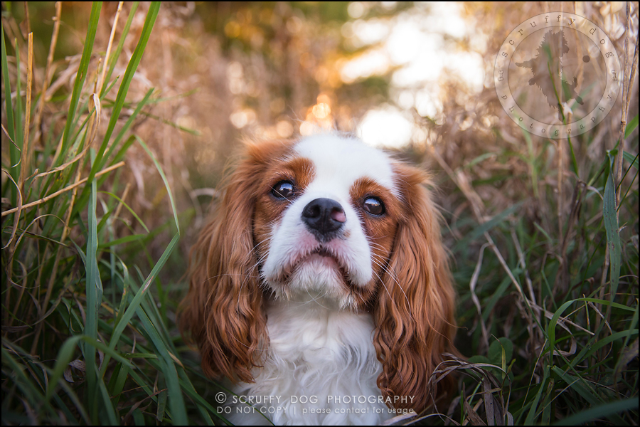 10_london_ontario_pet_photographer_brandi toby landry-195