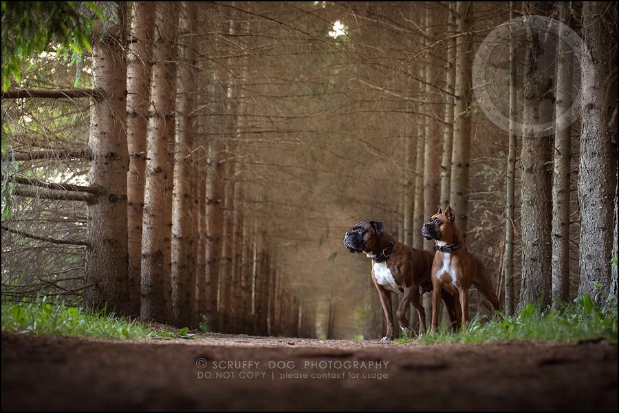 10_windsor_ontario_pet_photographer_capone echo barnett-263