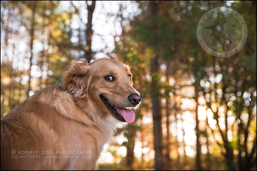 11_london_ontario_pet_photographer_brandi toby landry-199