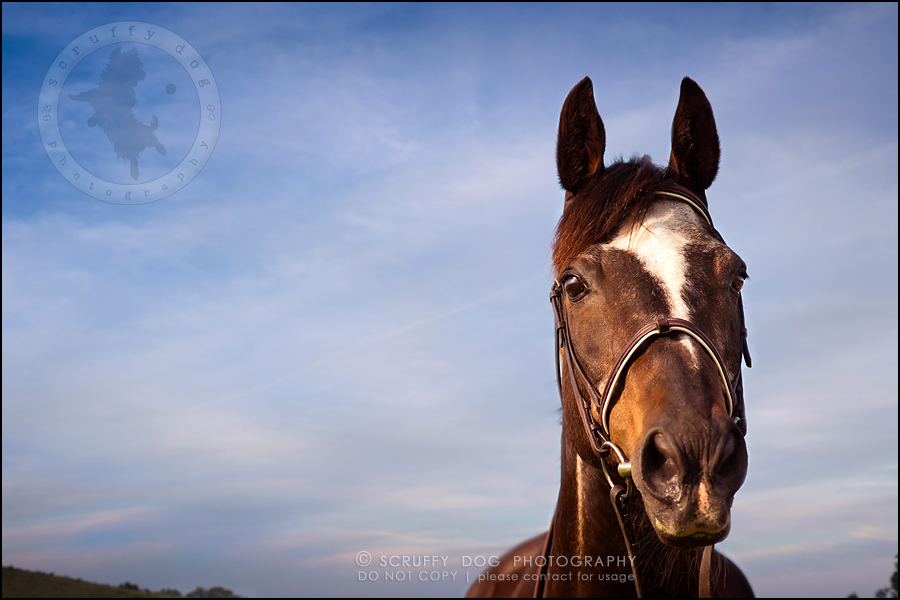 11waterloo_horse_dog_photographer_boston woody moffatt-265-Edit