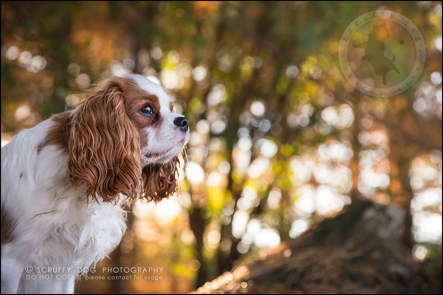 12_london_ontario_pet_photographer_brandi toby landry-221