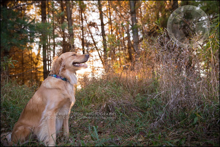 13_london_ontario_pet_photographer_brandi toby landry-224