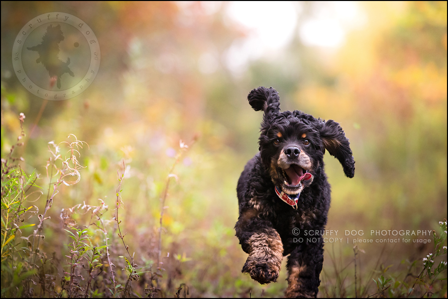13_ontario_pet_exclusive_photographer_chewy jethro joker II-692