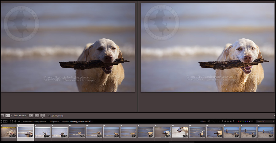13_photography_lightroom_photoshop_before-and-after chewy