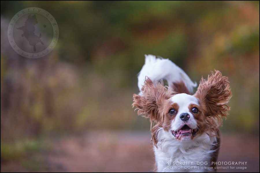 14_london_ontario_pet_photographer_brandi toby landry-277