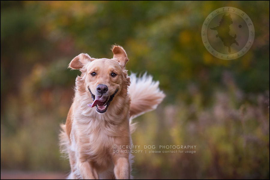 15_london_ontario_pet_photographer_brandi toby landry-314