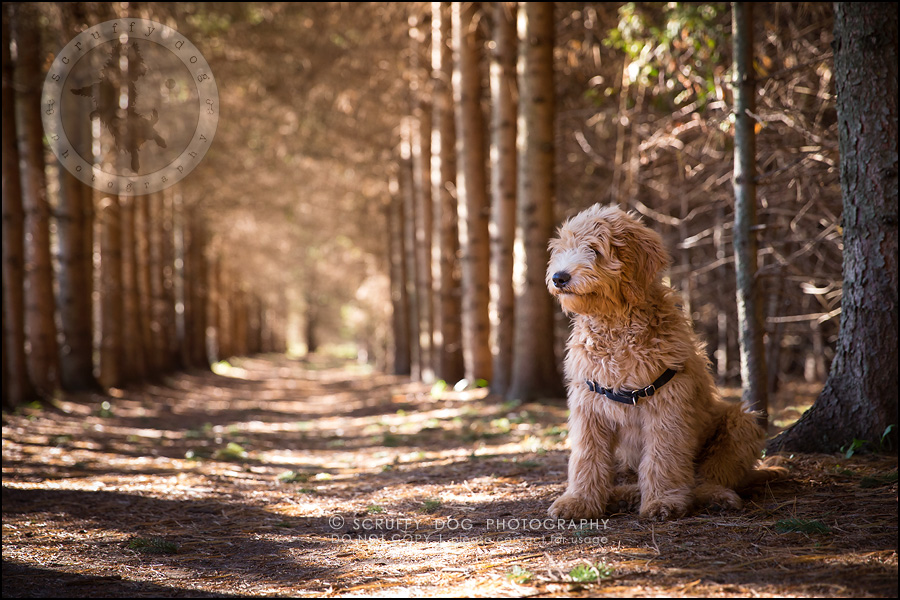 15_toronto_pet_photographer_amadeus wilcox-543