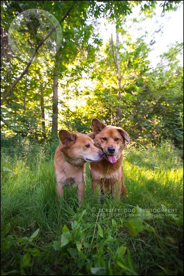 16_toronto_pet_photographer_baby teddy au-379