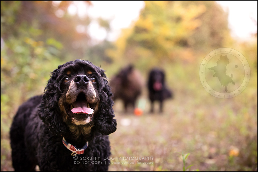 17_ontario_pet_exclusive_photographer_chewy jethro joker II-812