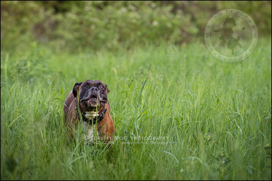 18_windsor_ontario_pet_photographer_capone echo barnett-472
