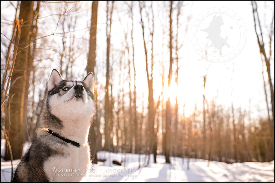 19_ontario_pet_photographer_alame huskies-546-Edit