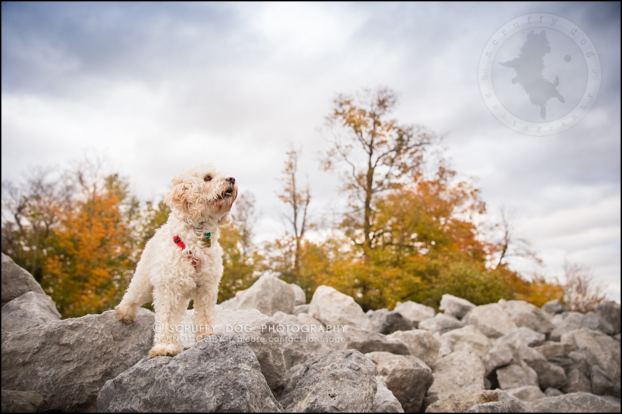 20waterloo_ontario_pet_exclusive_photographer_chinook george beckett-680
