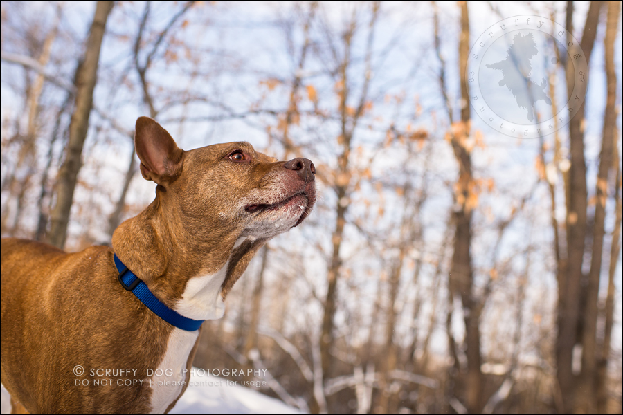 21toronto_ontario_pet_exclusive_photographer_diesel muffin hopkins-419
