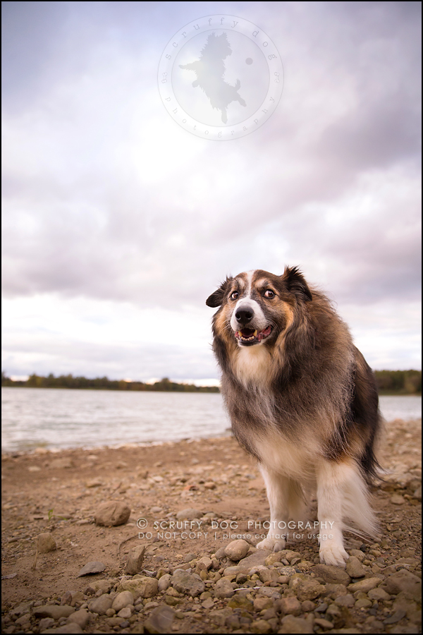 21waterloo_ontario_pet_exclusive_photographer_chinook george beckett-697