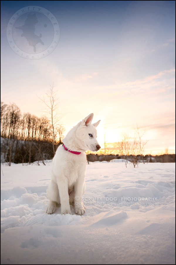 24_ontario_pet_photographer_alame huskies-349-Edit-2