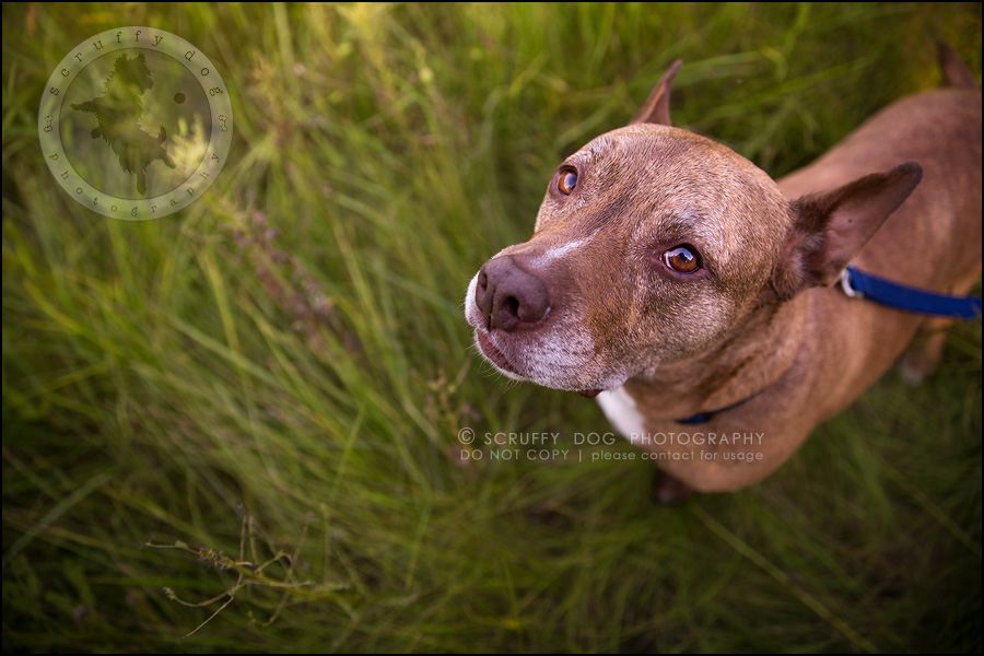 25toronto_ontario_pet_exclusive_photographer_diesel muffin hopkins-957