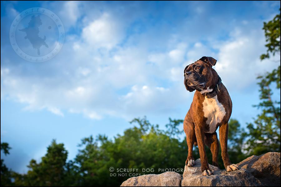 26_windsor_ontario_pet_photographer_capone echo barnett-764