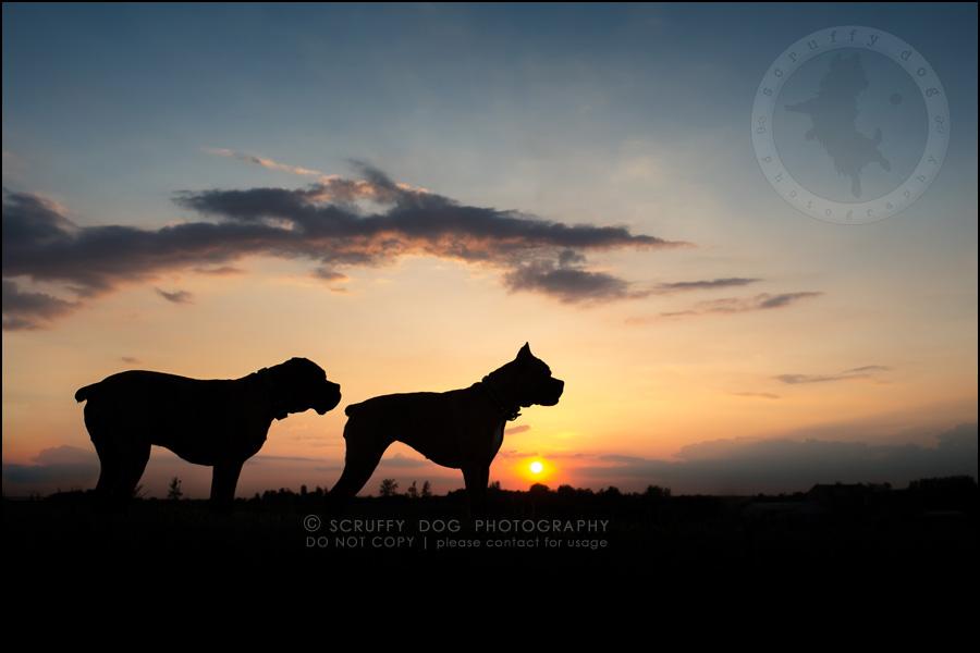 28_windsor_ontario_pet_photographer_capone echo barnett-841-Edit