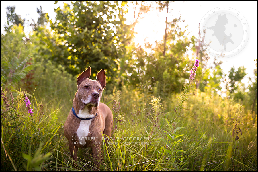 34toronto_ontario_pet_exclusive_photographer_diesel muffin hopkins-929-Edit