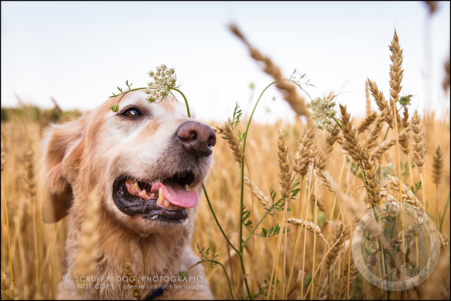 38toronto_ontario_pet_exclusive_photographer_diesel muffin hopkins-1121