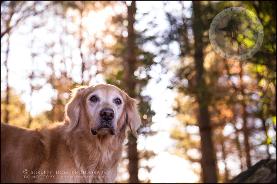45toronto_ontario_pet_exclusive_photographer_diesel muffin hopkins-1758