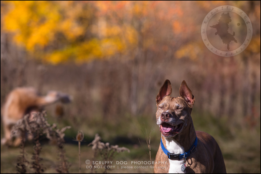 46toronto_ontario_pet_exclusive_photographer_diesel muffin hopkins-1386