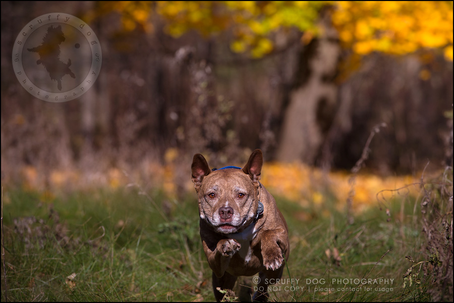 47toronto_ontario_pet_exclusive_photographer_diesel muffin hopkins-1275