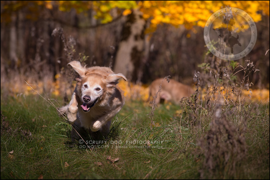 49toronto_ontario_pet_exclusive_photographer_diesel muffin hopkins-1253