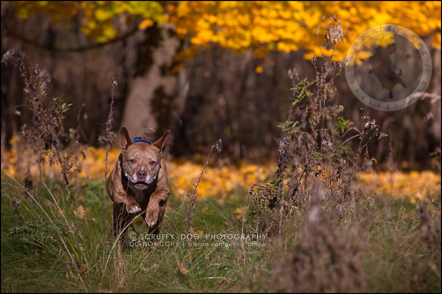 50toronto_ontario_pet_exclusive_photographer_diesel muffin hopkins-1259