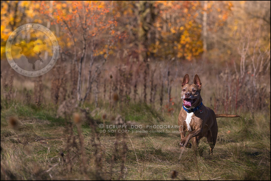 56toronto_ontario_pet_exclusive_photographer_diesel muffin hopkins-1425