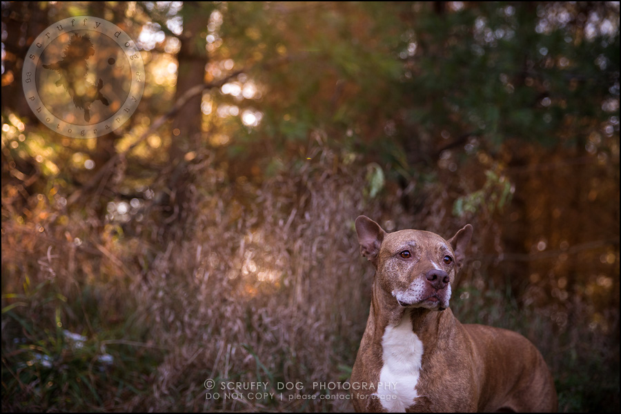 58toronto_ontario_pet_exclusive_photographer_diesel muffin hopkins-1630