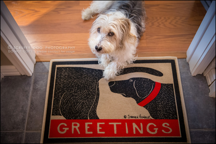 The new scruffy dog digs kitchener waterloo pet photographer welcome rug 10 solutioingenieria Choice Image