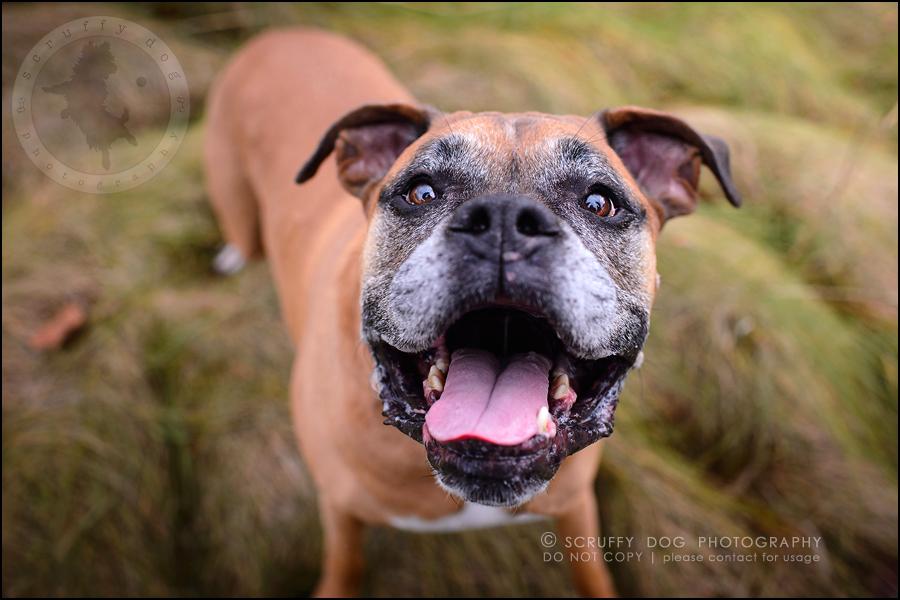 01-brampton-ontario-best-professional-dog-photographer-moose rocket-712