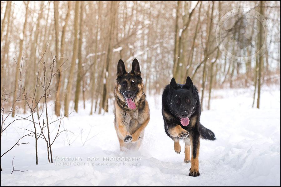 01-toronto-ontario-best-professional-pet-photographer-maya blitz-124