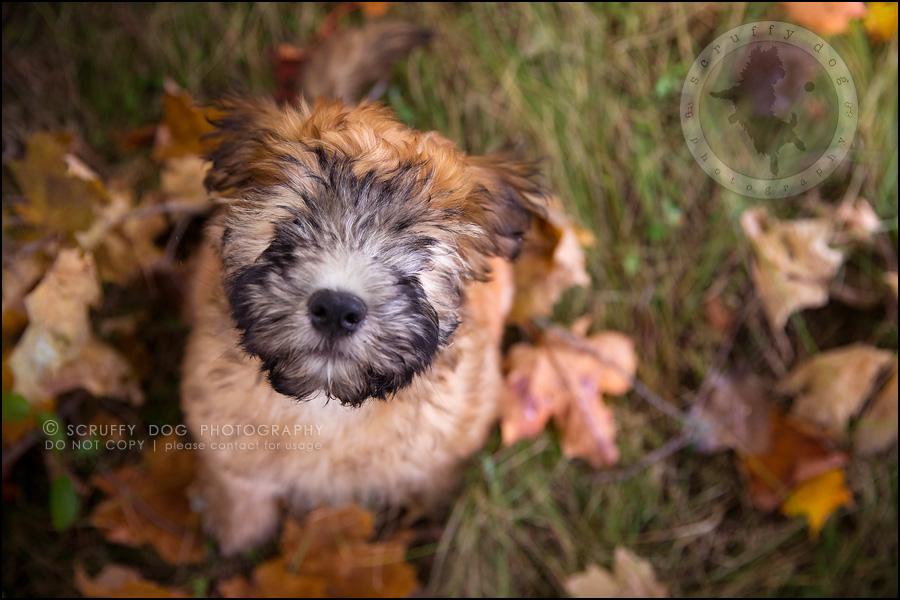 01-toronto-ontario-best-professional-pet-photographer-milford giza-308