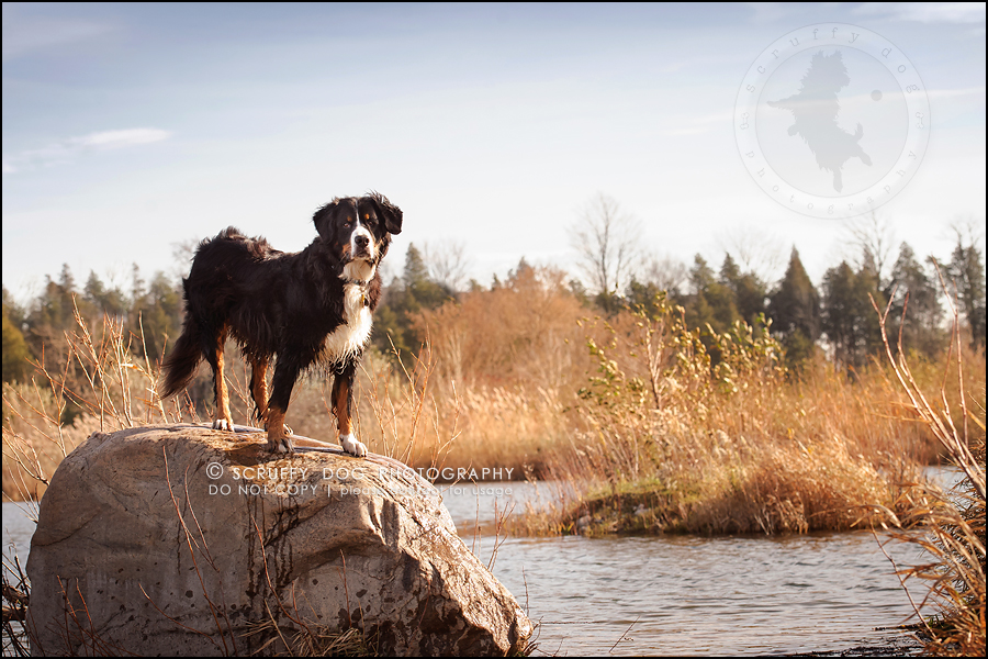 01-toronto-ontario-professional-dog-photographer-henry martha-58