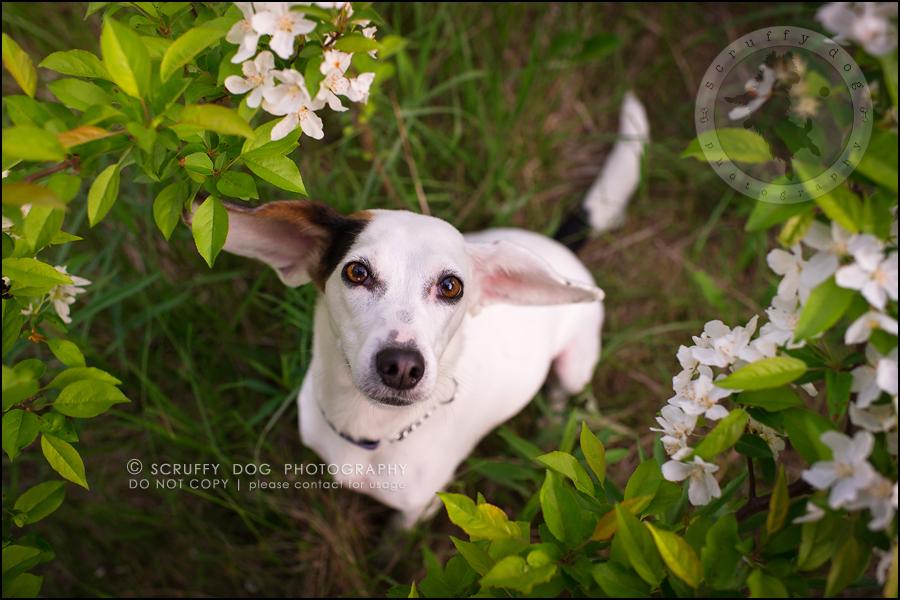 01-toronto-ontario-professional--dog-photographer-lucy frederick-23