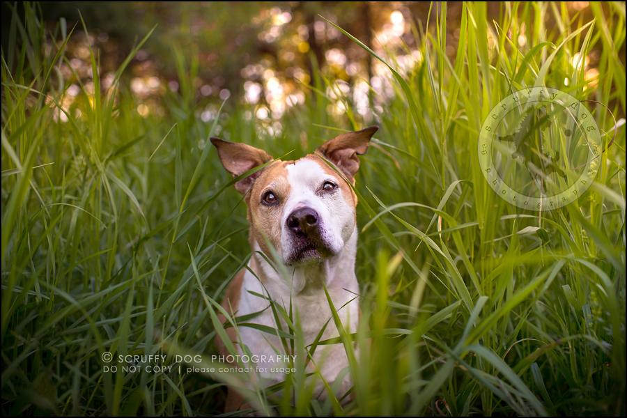 01-toronto-ontario-professional-pet-photographer-jade perry-237