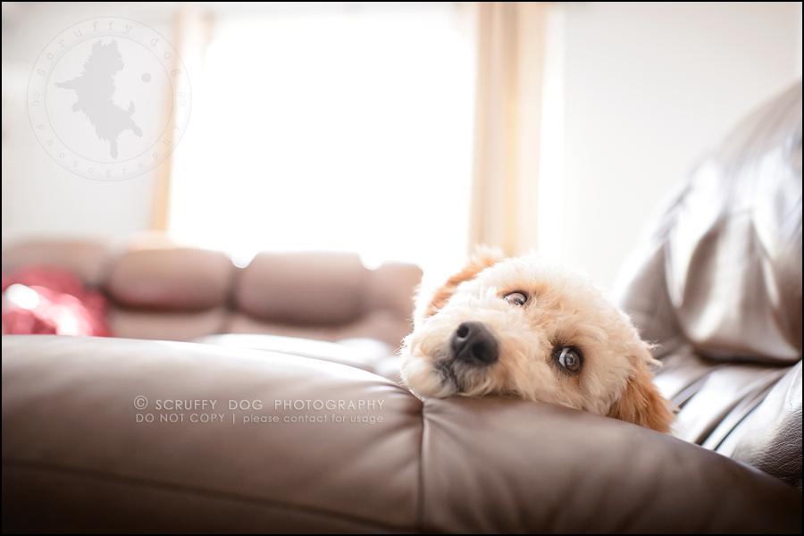 01-waterloo-ontario-dog-stock-photography-gulliver george-13