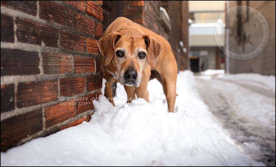01-waterloo-ontario-professional--dog-photographer-best-makeda slinger-395