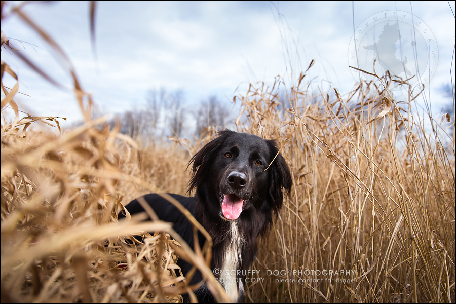 01-waterloo-ontario-professional-dog-photographer-hudson manning-30