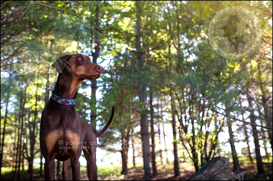 01_guelph_ontario_pet_photographer_best_dog_reese hunsberger-15