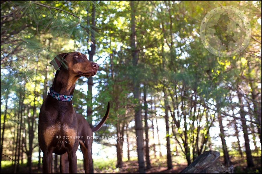 01_guelph_ontario_pet_photographer_best_dog_reese hunsberger-15