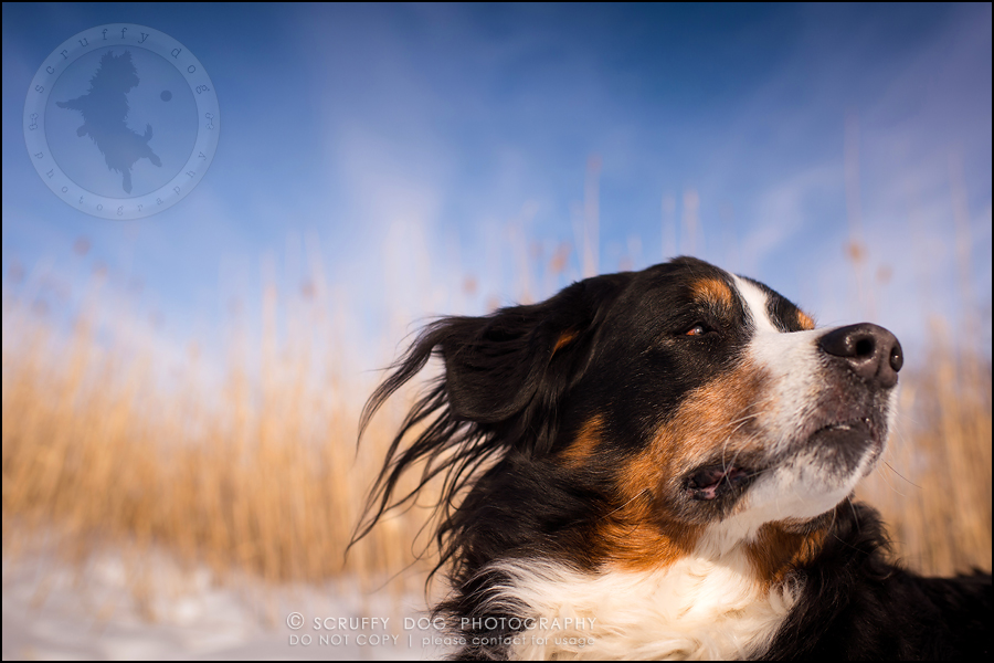 01_toronto_ontario_dog_stock_photography_grace zoe carr-499