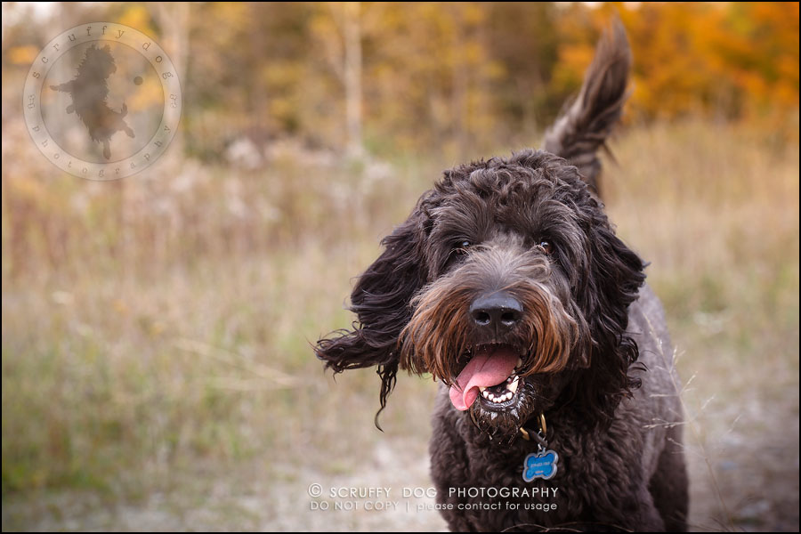 01_waterloo_ontario_best_pet_photographer_murphy odonovan-268