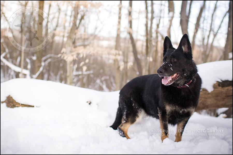 02-toronto-ontario-best-professional-pet-photographer-maya blitz-160