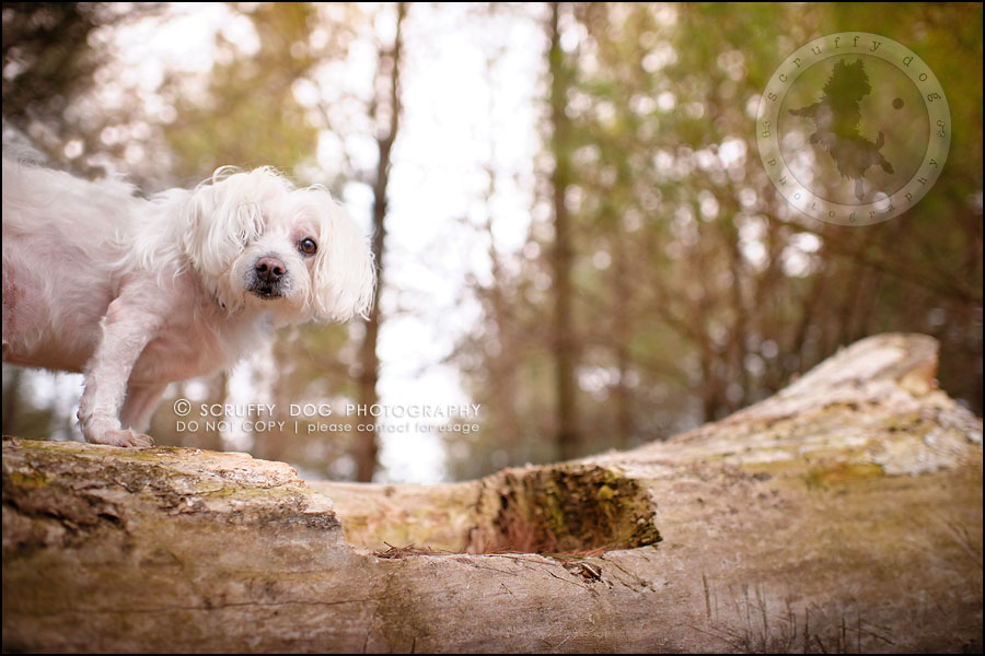 02-toronto-ontario-best-professional-pet-photographer-mika bobby worton-167