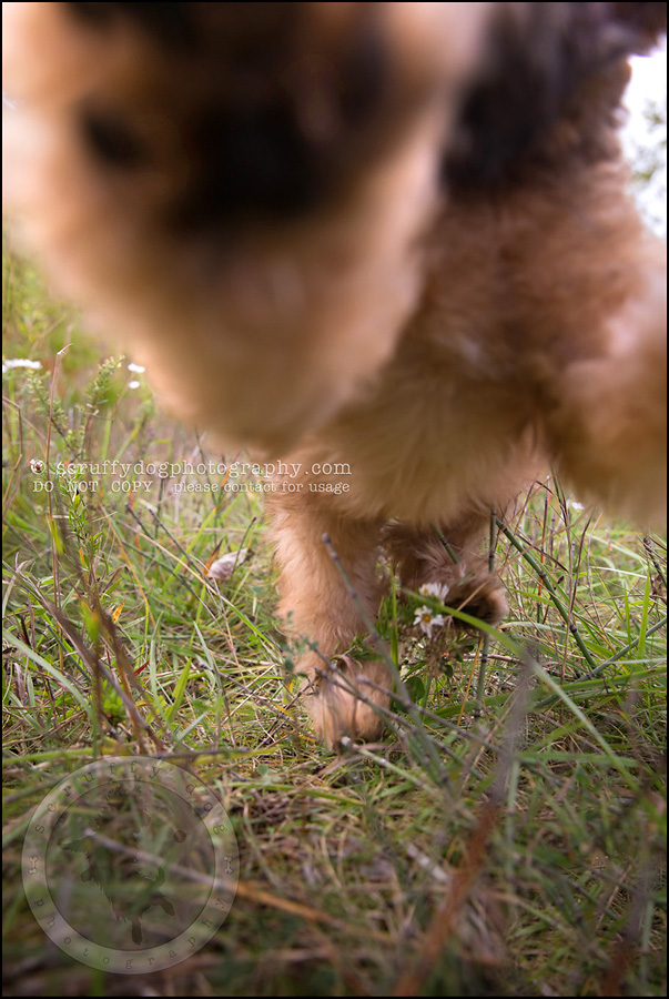 02-toronto-ontario-best-professional-pet-photographer-milford giza-62